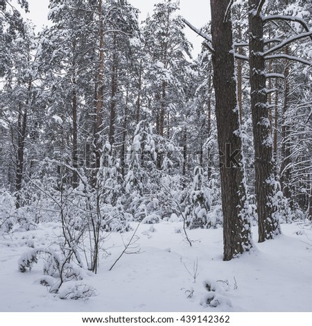 In the winter a lot of snow has fallen in the forest