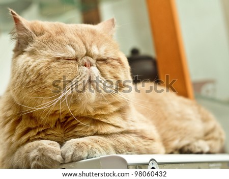 In winter and spring where it feels code, people and cat like lying in warm places and rather than wake up - stock photo