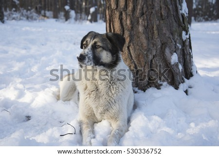 In winter, the snow lies a stray black dog.
