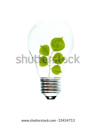 Incandescent light bulb with a tree shoot as the filament