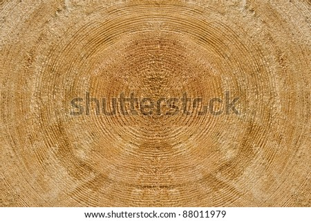 incised trunk of the old tree - stock photo