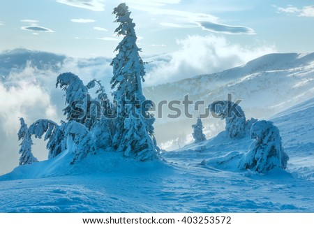 Inclined icy snowy fir trees on winter morning hill in cloudy misty weather. - stock photo