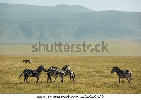 Incredible wildlife landscape in the african savanna