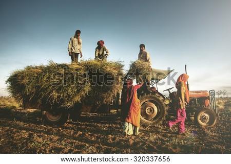 India Family Farming Harvesting Crops Harvesting Concept - stock photo