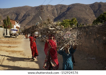 India, Rajasthan, Pushkar, indian women carrying wood branchs on their heads - stock photo