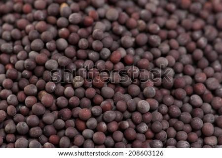 Indian Brown Mustard Seeds  - stock photo