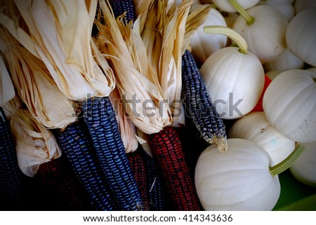 Indian corn and white pumpkins - stock photo
