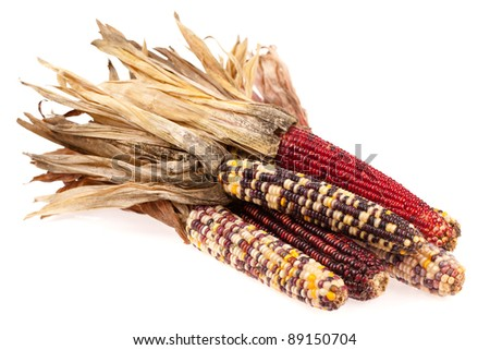 Indian corn bunch isolated on white
