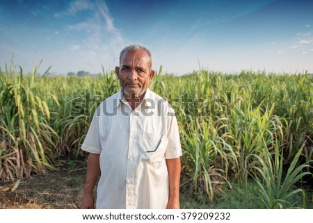 Indian educated farmer in his Sugar cane field, rural village Salunkwadi, Ambajogai, Beed, Maharashtra, India, South East Asia. - stock photo