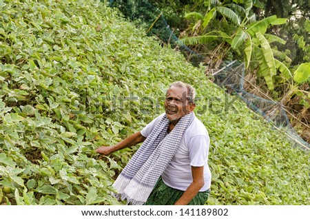 Indian Farmer working in his field. - stock photo