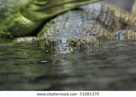 Indian gavial - stock photo