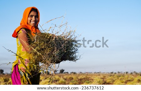 Indian girl working on the farm. near Jaipur, India.  - stock photo