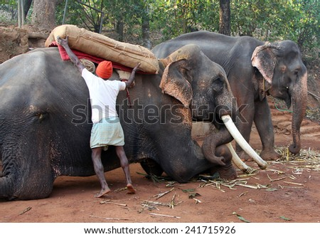 Indian man putting weight on the back of the elephant