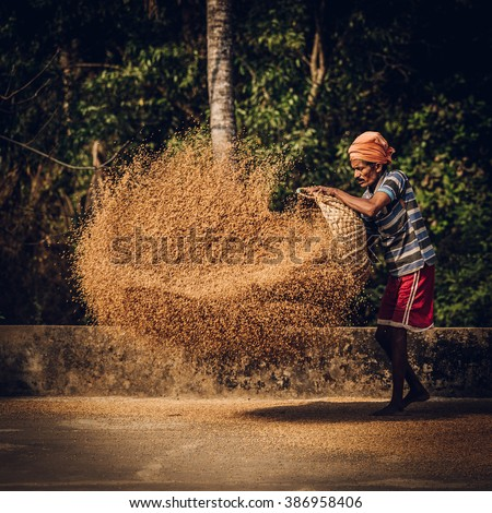 indian man scatters wheat - stock photo