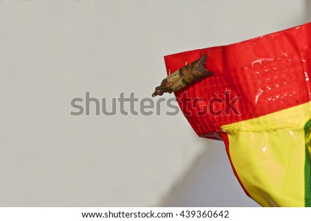 Indian Meal Moth - stock photo