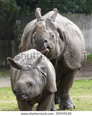 Indian rhinoceros with calf