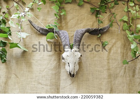 Indian Skull animal, detail of an ancient Indian tradition - stock photo