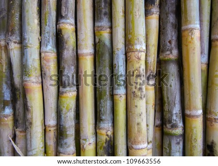 Indian sugar cane unpeeled - stock photo