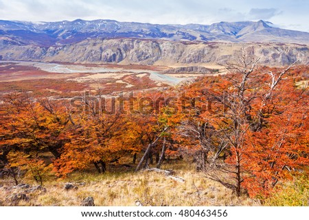 Indian summer forest near the Fitz Roy in autumn. Fitz Roy is a mountain near El Chalten in Patagonia on the border of Chile and Argentina.