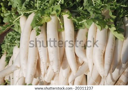 indian white radishes, raw used in salads - stock photo