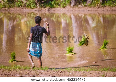 Indian young man throwing a bundle of rice sprouts into the water
