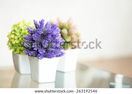 Indoor plant in a bathroom window - stock photo