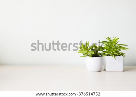 Indoor Plant On Wooden Table White Stock Photo 378165268 ...