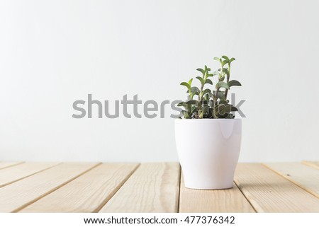 Indoor Plant On Wooden Table White Stock Photo 376514725 ...