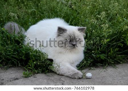 Indoor White Domestic Cat Sit Garden Stock Photo (Royalty Free) 766102978    Shutterstock