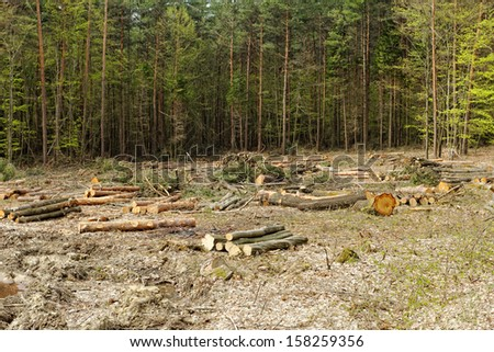 industrial deforestation and logging - stock photo