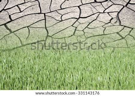 Infertile land burned by the sun: desertification concept - stock photo