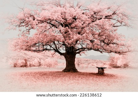 Infrared big tree. Composition of nature. - stock photo