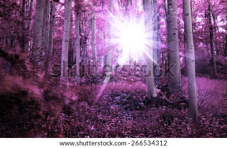 infrared forest landscape with sunrays over the trees  - stock photo