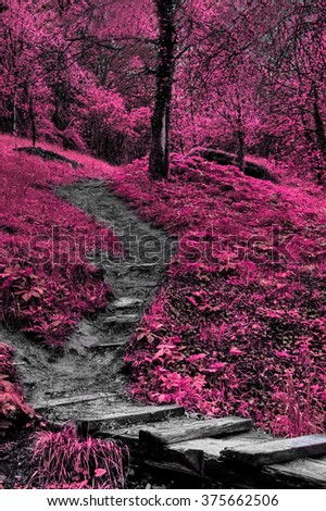 infrared forest vertical landscape with path leading to woods  - stock photo