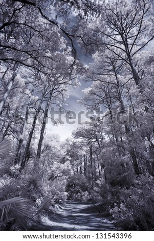 infrared photo of pine forest and sky with path