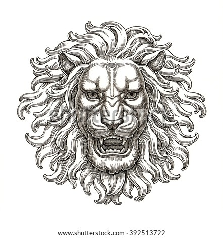 Ink and pen drawing, lion head on white background. - stock photo