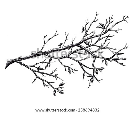 Ink hand drawn branch, isolated on white - stock photo