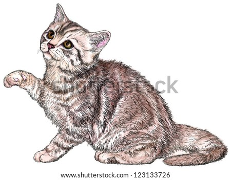 ink & Wash Kitten Illustration - stock photo