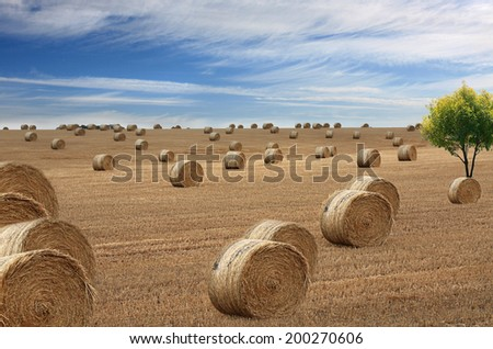 inland Australia a view of freshly rolled hay - stock photo