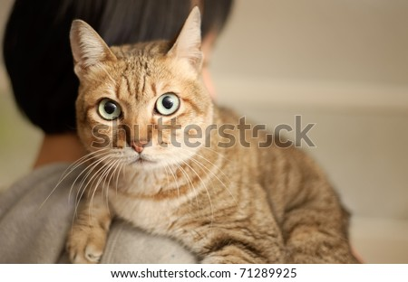 Innocent cat lie on shoulder of woman stare at you. - stock photo
