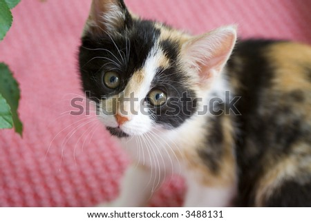 Innocent expression an a baby kitten - stock photo