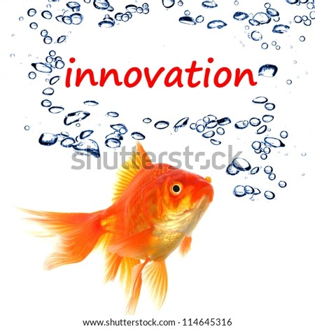 innovation word and goldfish showing business idea or science concept