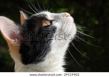 Inquisitive home cat stakes out bird - stock photo