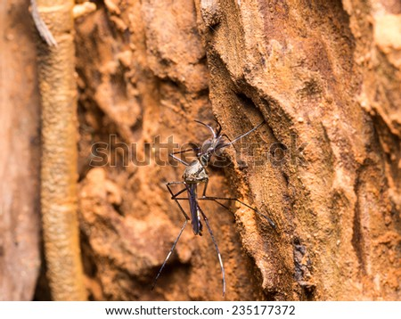 Insect and Bug - stock photo