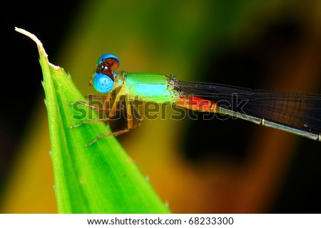 insect come from nature - stock photo