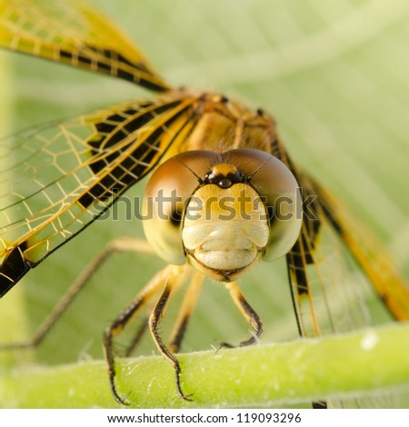 insect dragonfly macro nature background - stock photo