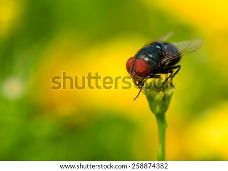 Insect fly macro on yellow flower. - stock photo