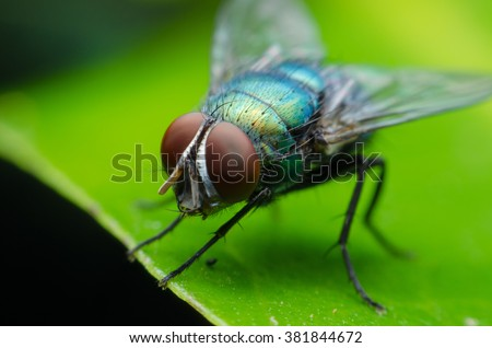 insect fly on on green leaf - stock photo