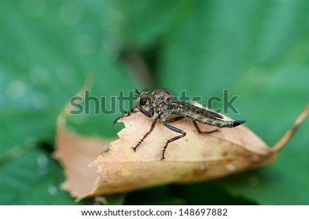 Insect gad horse fly - stock photo