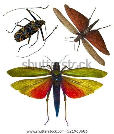 locust stock photos royaltyfree images  vectors